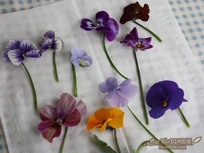 押し花作り