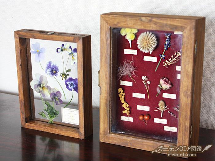 植物標本DIY