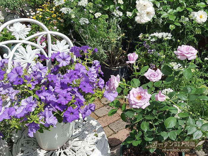 鉢植えのバラ