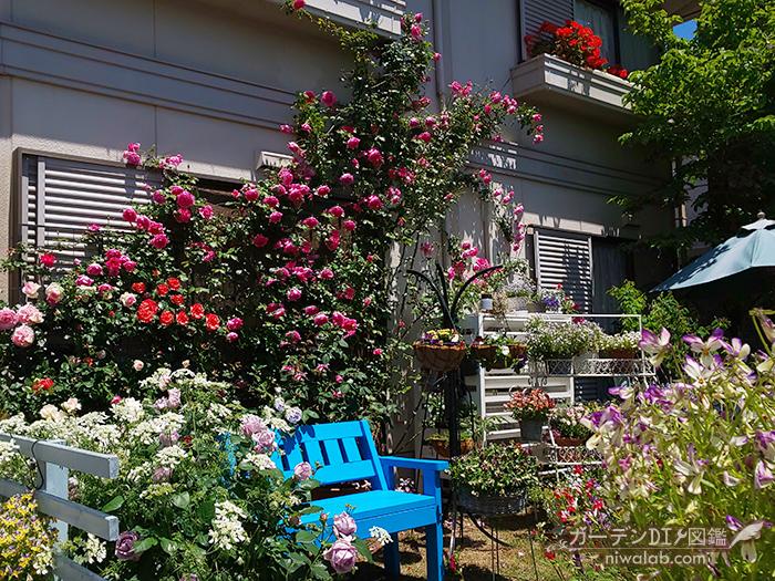 青いベンチとバラ
