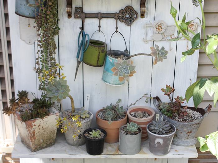 雑貨や植物