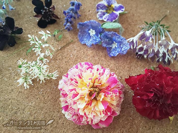 庭の花ドライフラワー