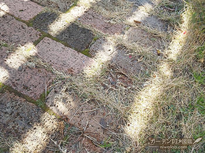 芝生が入り込む