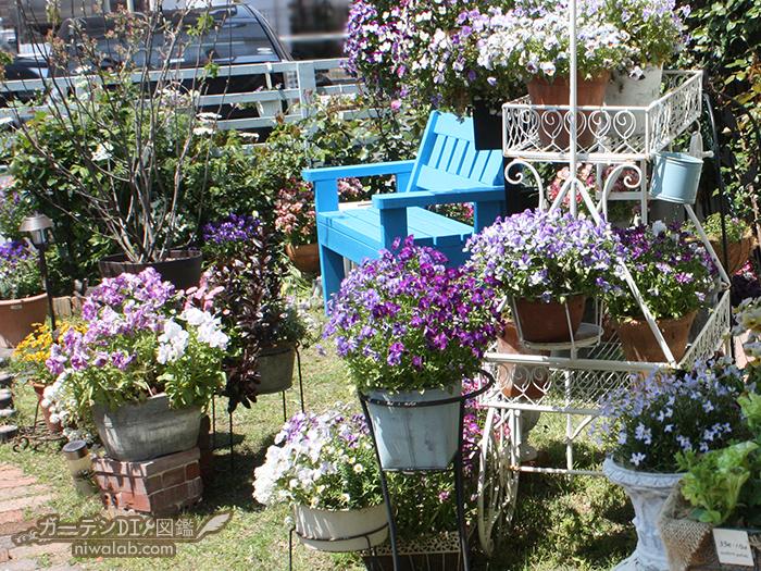 ビオラの庭