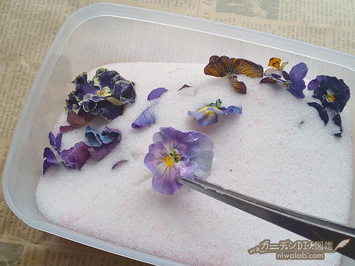 花を取り出す