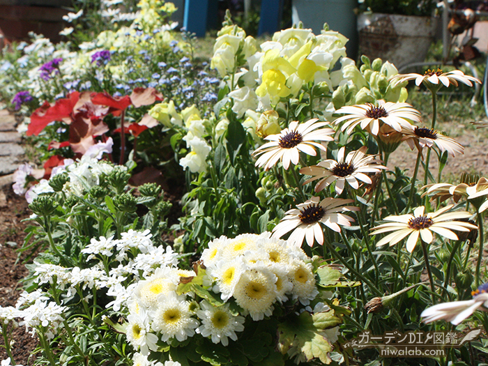 春の花壇花