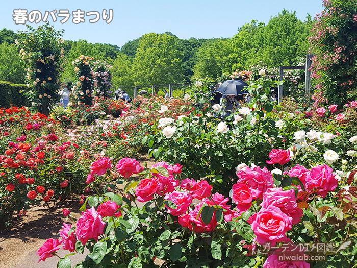 花フェスタ記念公園バラまつり