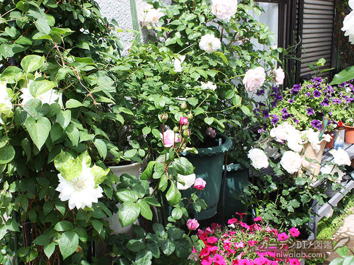 バラと植物