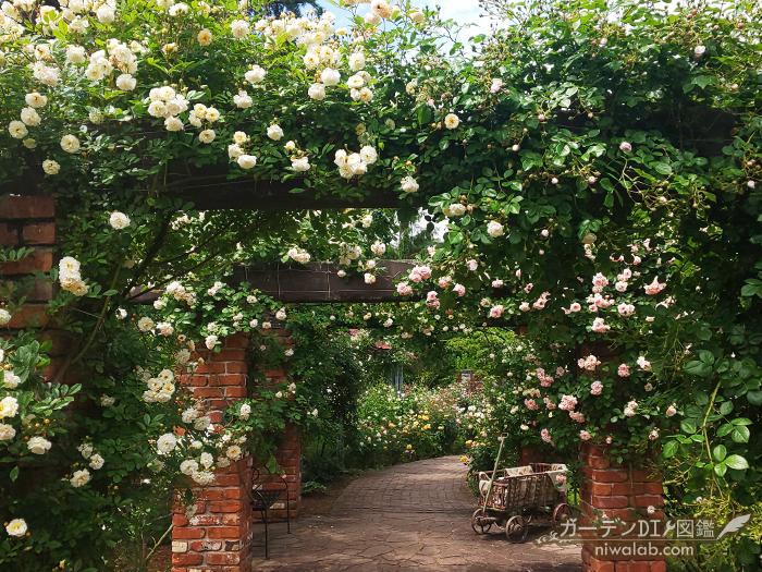 ローザンベリーのバラ