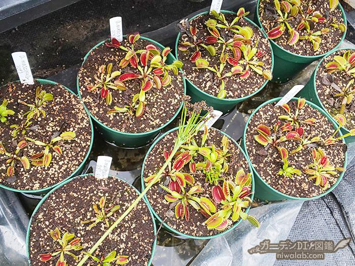 食虫植物特徴