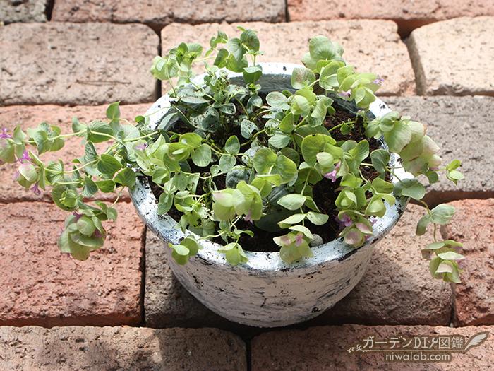 植物植え付け