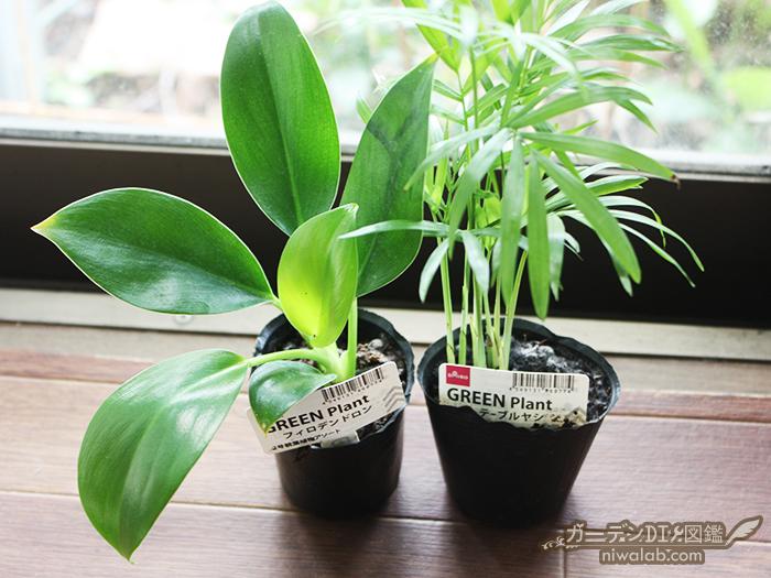 ダイソー観葉植物