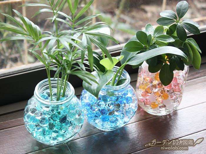観葉植物を育てる