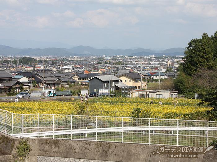 道の駅からひまわり畑